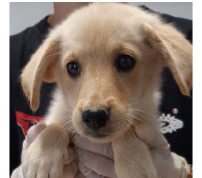 In cerca di casa, cuccioli in adozione cremona e provincia - adozione cani e gatti