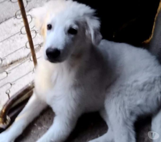 Oregon, cucciolo di 4 mesi in rifugio alessandria - adozione cani e gatti