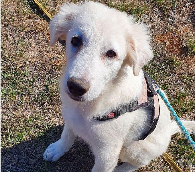 Texas, stupendo cucciolo di 4 mesi arezzo - adozione cani e gatti