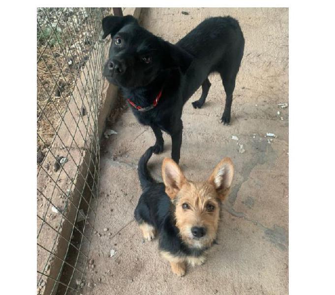 Ercolina, taglia piccola cerca casa pesaro - adozione cani e gatti