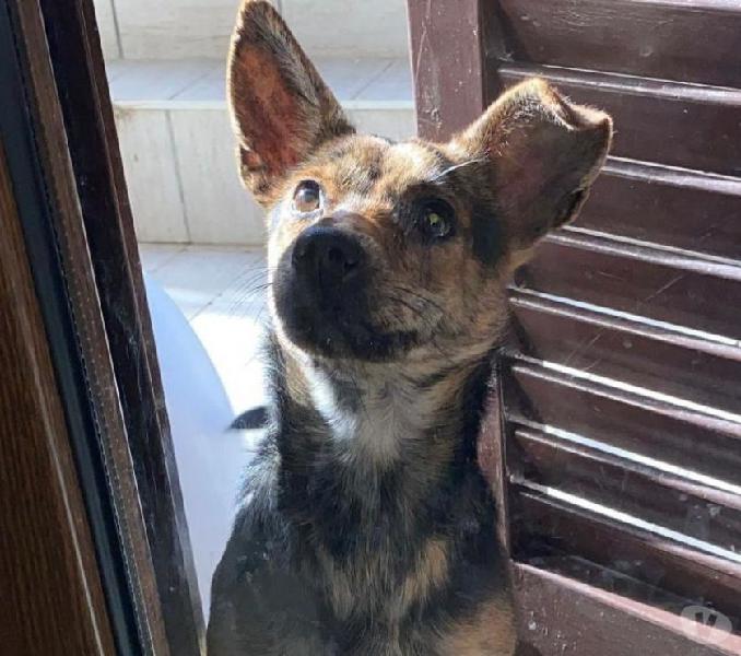 Margot: giovane taglia piccola cerca nuova famiglia pisa - adozione cani e gatti